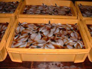 魚を秘伝の味醂ダレに漬け込む