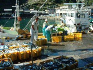 熊野漁協での魚の仕入れ